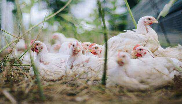 China sees the first human case of bird flu H10N3 strain